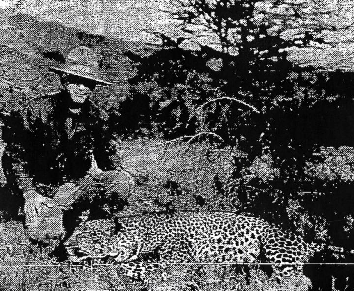 maxwellandleopard