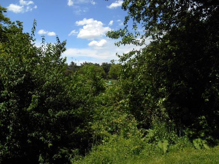 treesofelmwood